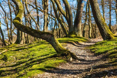 Pfad durch Wald